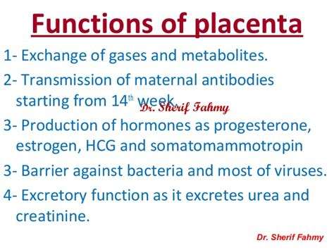 Placenta & Amnion (General Embryology)