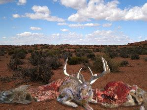 STATE PARK HORROR AS JACKALOPE SLAUGHTERS HIKERS | The Mud