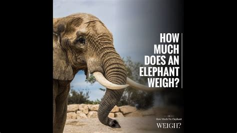 How much does an elephant weigh? - YouTube